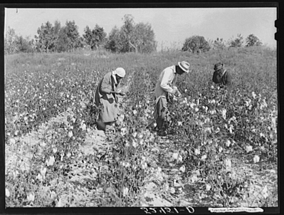 wilson-02-cotton-pickers